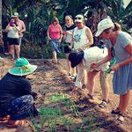 Growing Vegetable in Khmer Farm