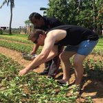 Guest Ptanting Vegetable
